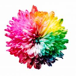 Colour Wheel Flower